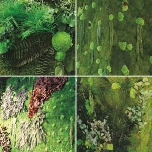 muschio-con-foglie